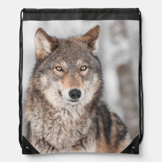 Grey Wolf (Canis lupus) With One Ear Back Cinch Bags