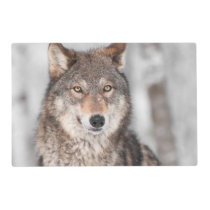 Grey Wolf (Canis lupus) With One Ear Back Placemat