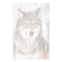 Grey Wolf (Canis lupus) With One Ear Back Stationery