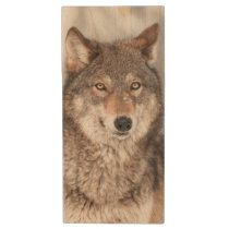 Grey Wolf (Canis lupus) With One Ear Back Wood USB Flash Drive