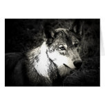 Grey Wolf Cards
