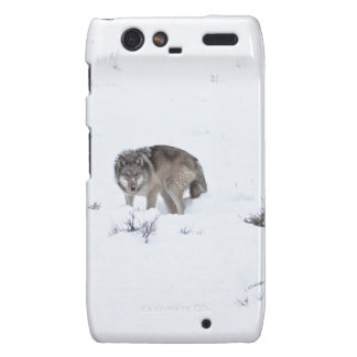 Grey Wolf Droid RAZR Cases