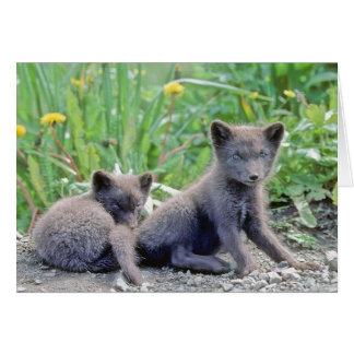 Grey Wolf Cubs Greeting Card