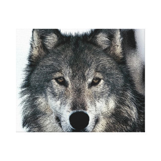 Grey Wolf Eyes Wrapped Canvas Gallery Wrap Canvas