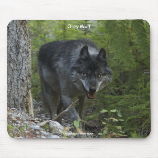 Grey Wolf & Forest Wildlife-Photography Mouse Pad
