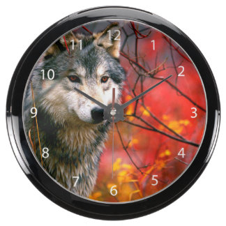 Grey Wolf in Beautiful Red and Yellow Foliage Aquavista Clocks