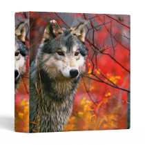 Grey Wolf in Beautiful Red and Yellow Foliage Binder