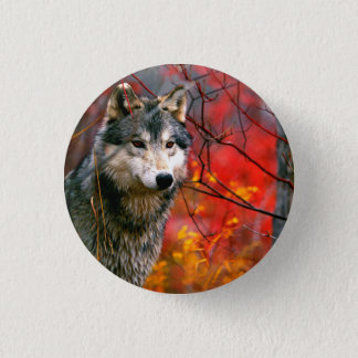 Grey Wolf in Beautiful Red and Yellow Foliage Button