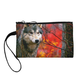 Grey Wolf in Beautiful Red and Yellow Foliage Change Purse