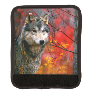 Grey Wolf in Beautiful Red and Yellow Foliage Handle Wrap