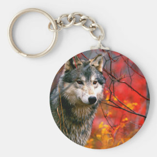 Grey Wolf in Beautiful Red and Yellow Foliage Keychain