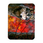 Grey Wolf in Beautiful Red and Yellow Foliage Rectangular Photo Magnet