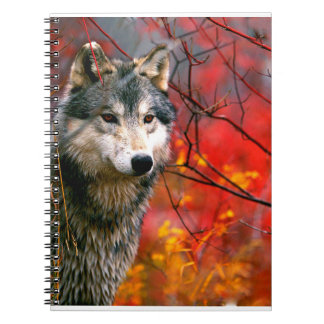 Grey Wolf in Beautiful Red and Yellow Foliage Spiral Notebook