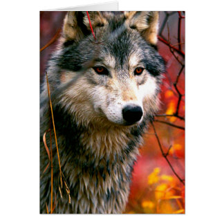 Grey Wolf in Beautiful Red and Yellow Foliage Stationery Note Card