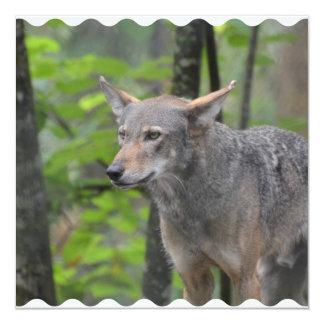 Grey Wolf 5.25x5.25 Square Paper Invitation Card