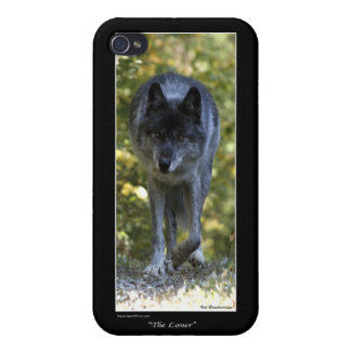 Grey Wolf iPhone Case iPhone 4/4S Covers