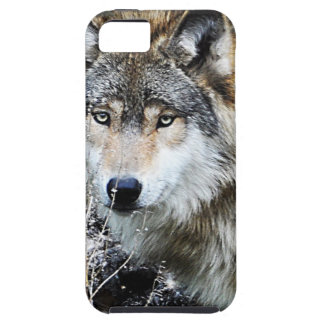 Grey Wolf iPhone Case iPhone 5 Cases
