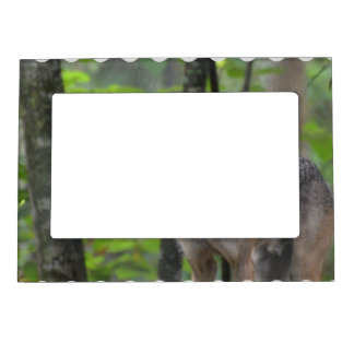 Grey Wolf Magnetic Photo Frames