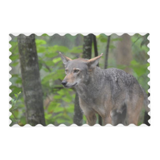 Grey Wolf Laminated Placemat