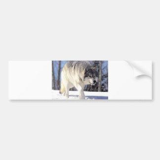 Grey Wolf On The Prowl Bumper Sticker