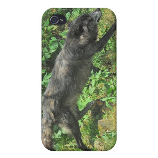 Grey Wolf Photo Art Collection iPhone 4 Case