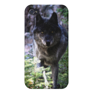 Grey Wolf Photo Art Collection iPhone 4 Cases