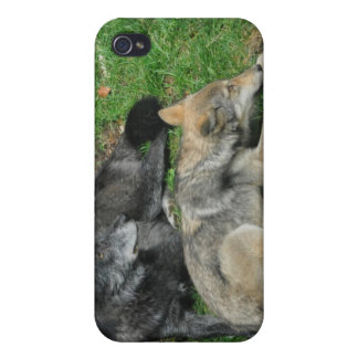 Grey Wolf Photo Art Collection iPhone 4 Covers