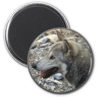 GREY WOLF Photo Magnet