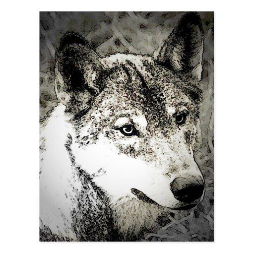Grey Wolf Portrait Postcard