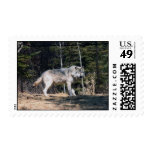 Grey Wolf Postage Stamp