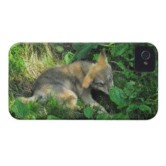 Grey Wolf Pup Wildlife Photo Blackberry Case