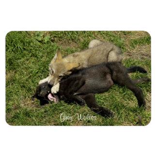 Grey Wolf Pups Wildlife Magnet