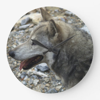 Grey Wolf Study Wildlife-Supporter Photo Clock