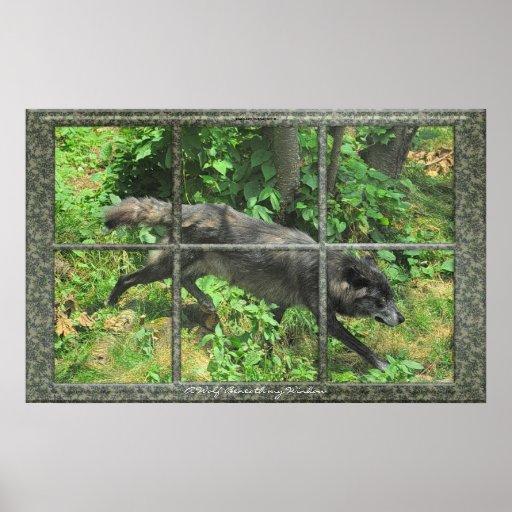 Grey Wolf Through A Window Art Poster