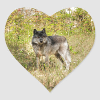 Grey Wolf & Wilderness Photo Gift Heart Sticker