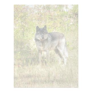 Grey Wolf & Wilderness Photo Gift Letterhead