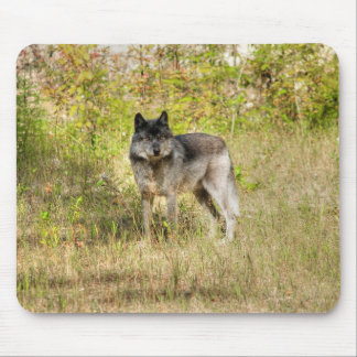 Grey Wolf & Wilderness Photo Gift Mouse Pad