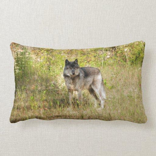 Grey Wolf & Wilderness Photo Gift Throw Pillows