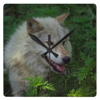 Grey Wolf Wildlife Animal-lover Clock