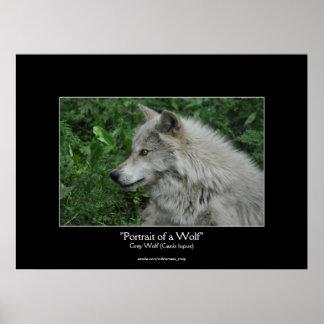 Grey Wolf Wildlife Photo Portrait Posters