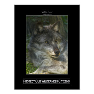 GREY WOLF Wildlife Support Poster