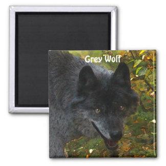 GREY WOLF Wildlife Supporter Art  Magnet