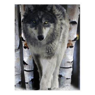 Grey Wolf & Winter Forest Wildlife Art Card Post Card