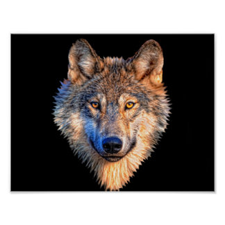 Grey wolf - wolf face poster