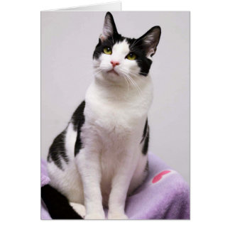 Greyfoot Cat Rescue Black and White Tuxedo Card