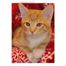 Greyfoot Cat Rescue Holiday Orange Tabby Card
