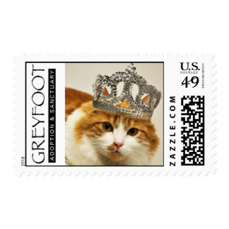 Greyfoot Cat Rescue Orange/White Princess Stamp