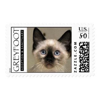 Greyfoot Cat Rescue Siamese Kitten Postage Stamp