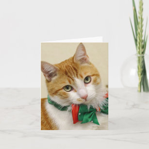 Stray Cat Rescue Christmas Cards SCR