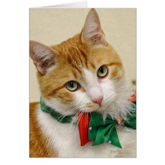 Greyfoot Cat Rescue Address